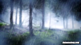 RAIN IN THE WOODS SLEEP SOUNDS | Nature's White Noise For Relaxation, Studying or Sleep | 10 Hours thumbnail