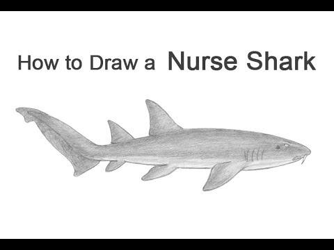 ABC Coloring Sheets - Cartoon Animal Alphabet Activity Sheets ... | 360x480