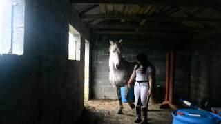 2 LEGGED HORSE?!
