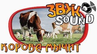 Корова ЗВУК, мычание коровы, голос коровы, мычит   Mooing cow, cow fx, cow sound, voice cow