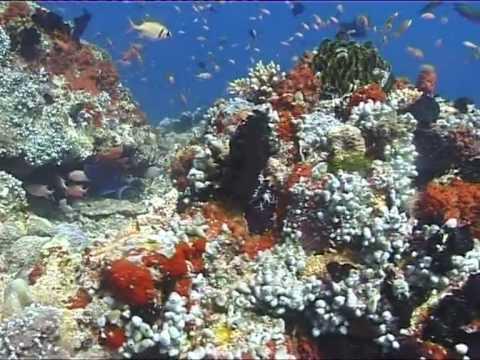 2009 Winner - Banyan Tree Maldives - Underwater Gardens