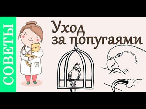 Уход за попугаями. Советы ветеринара.
