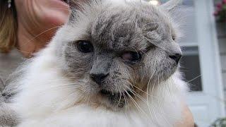 Жизнь кота с двумя мордочками.