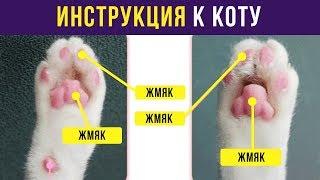 Приколы. ИНСТРУКЦИЯ К КОТУ | Мемозг #88