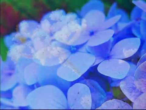 Медитация на голубой цвет - цвет спокойствия и умиротворения.