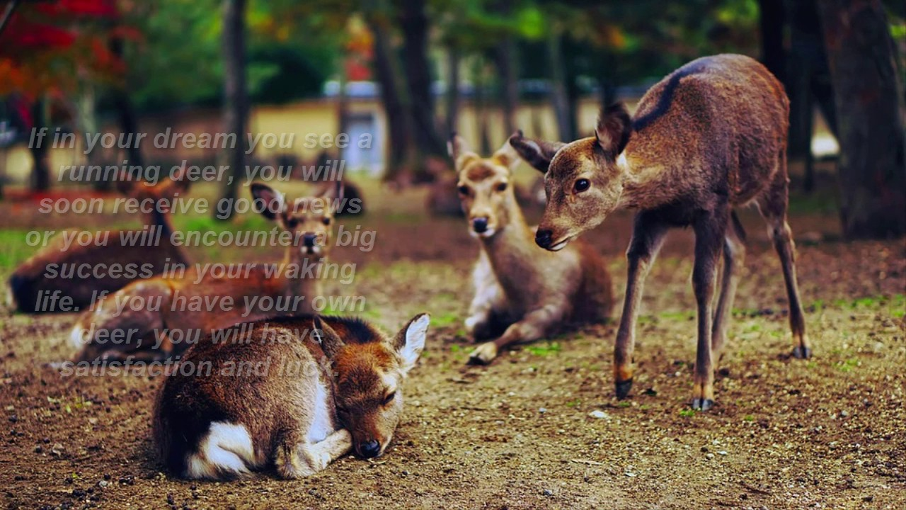 Deer dreams meaning youtube deer dreams meaning buycottarizona Images