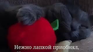 Фото Кот - рыцарь и яблоко. Прикольные коты. Приколы с котами.