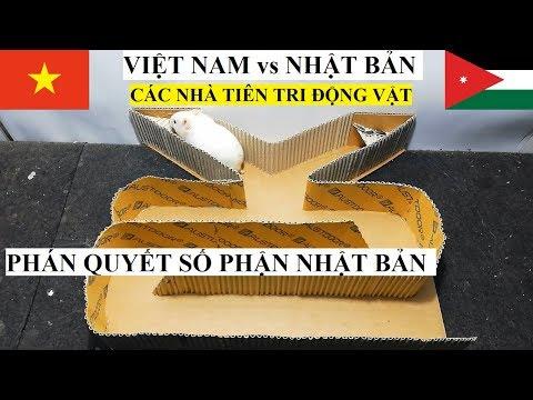 Việt Nam và Nhật Bản – Các nhà tiên tri Động Vật PHÁN QUYẾT SỐ PHẬN Samurai Xanh (asiancup 2019)