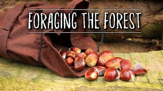 Foraging for Wild Food with my Dog | TAOutdoors