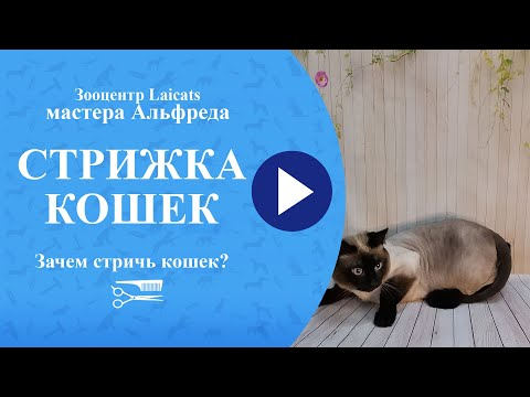 Стрижка кошек. Зачем стричь кошек?