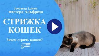 видео стрижка котов