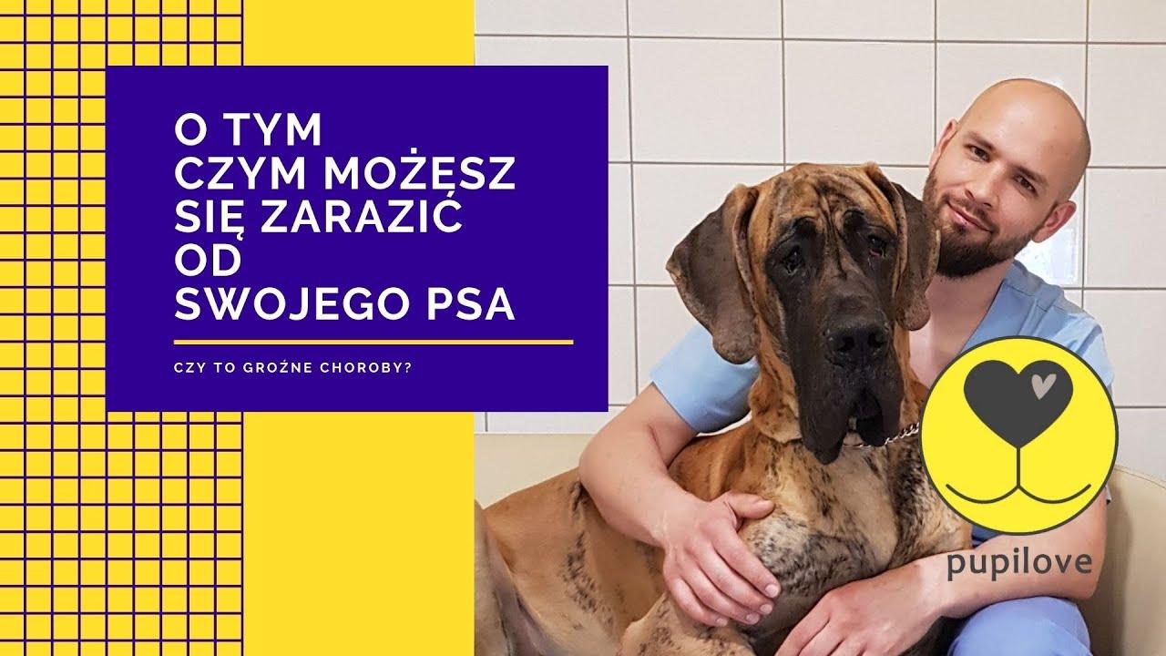 giardia és psow leczenie poligemma 11 vélemény