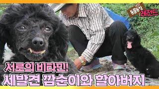 [TV 동물농장 레전드] '세발견 깜순이와 할아버지' 풀버전 다시보기 I TV동물농장 (Animal Farm…