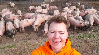 Visiting A Free Range Pig Farm...Happy Pigs!