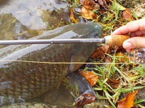 Carp On Extreme Pen Fly Rod Combo By Penfishingrods.com