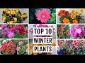 TOP 10 Winter Flowering Plants For Beginner Gardeners