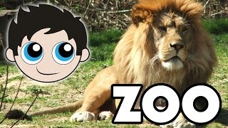 Visiting the Zoo - Lions, Bats, Owls, Fish, and More - Finding Nemo and Dory