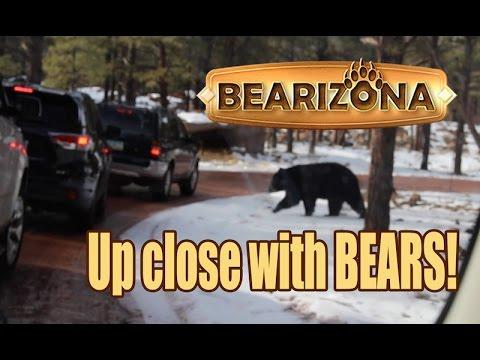Bearizona | Drive-Thru Wildlife Park | Williams Arizona