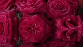 Rose garden - Lynne Anderson