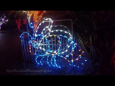 Miami Zoo Christmas Lights
