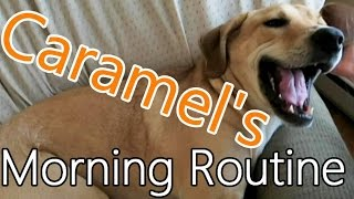 Spoiled Dog's Morning Routine.  Yes, This is True