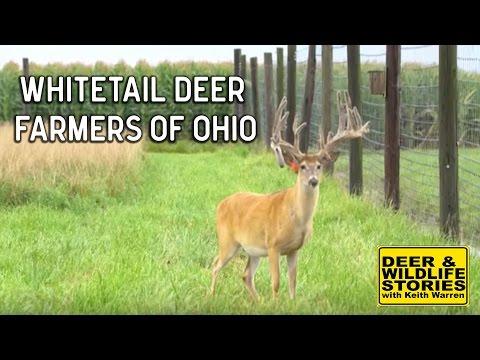 Whitetail Deer Farmers of Ohio   Deer & Wildlife Stories