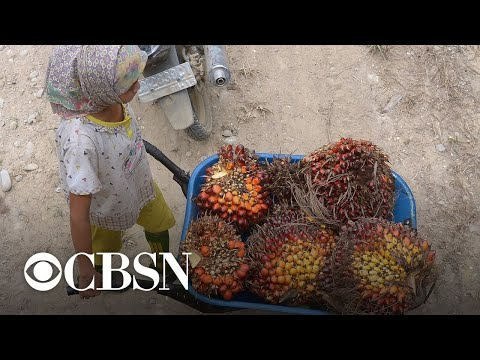 AP investigation uncovers child labor and slavery in lucrative palm oil industry