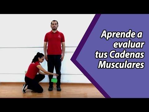 ¿cómo-identificar-tu-cadena-muscular-disfuncional-para-evitar-dolor?