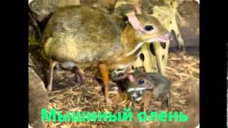 Удивительные животные нашей планеты  Выпуск №1