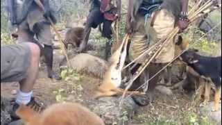 Into the Bush: Hunting with the #Hadzabe # Bushmen