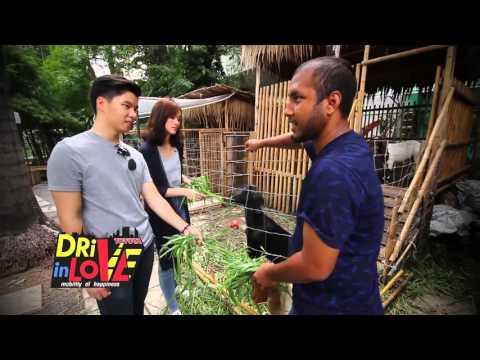TOYOTA Drive In Love Root Garden