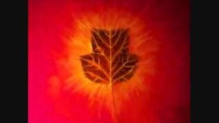 Michael Smyth - IDCR 151 - Creation Project (Leaves)