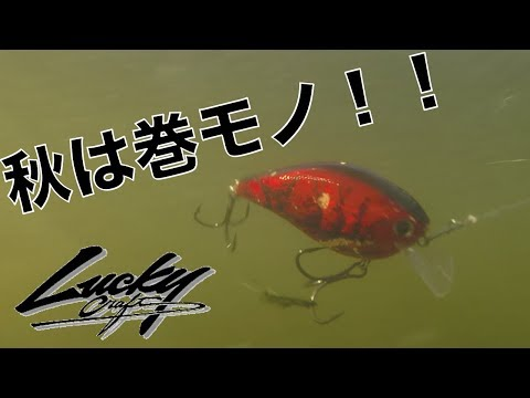 CURADO K秋はクランクベイト Lucky Craft LC25