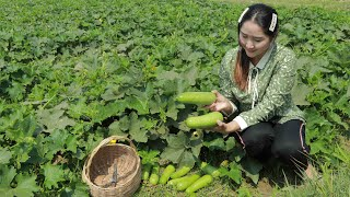 Wax Gourd Harvesting From Farm For Soup | Sros Yummy Cooking Vlogs