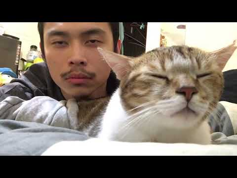 Cat and Owner Vibe Out to Music | Hotline Bling