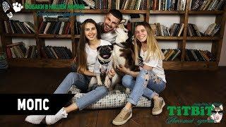 Собаки в нашей жизни: Интервью #5 (Мопс - проблемы, уход и содержание)