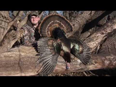 AH Exclusive: The Wonders Of Winter Turkey Hunting
