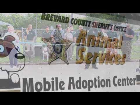 Opening of the new Brevard County Dog Park