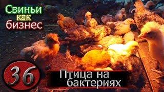 видео: ОТЗЫВ О ГЛУБОКОЙ ПОДСТИЛКЕ