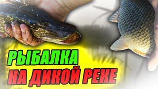 РЫБАЛКА на ДИКОЙ РЕКЕ ЗДЕСЬ ЕСТЬ ВСЁ Рыбалка на СПИННИНГ ФИДЕР и ПОПЛАВОК в ОКТЯБРЕ ПЕРЕЗАЛИВ