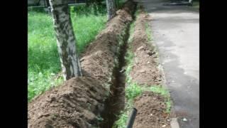 Смотреть видео варварство : убийство берёзовой аллеи 01.07.2017 МОСКВА, ЮЗАО онлайн