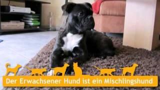 Mischlingshunde in Mühldorf am Inn
