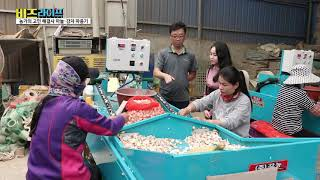 YTN비즈라이프 강농 마늘파종기 감자파종기