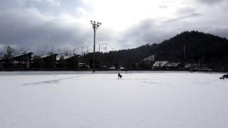 一面雪のグランドで犬達と遊びました。