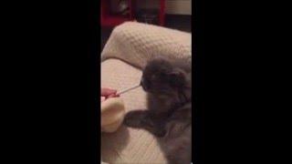 Кот или Собака? (Собака съела товар)