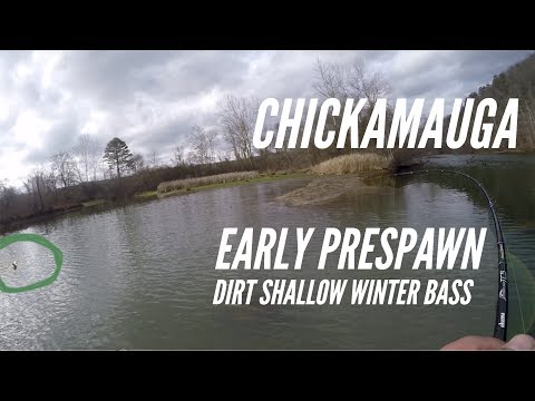 HELP!!! Chickamauga: Late Winter/Early Prespawn Smack down!!!