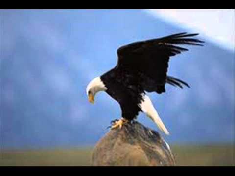Pur Adler Sollen Fliegen
