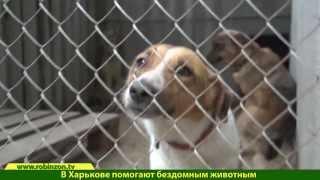 Приют бездомных животных. Харьков. Robinzon.TV(, 2014-06-25T12:18:40.000Z)