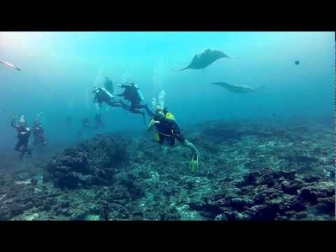 15 Minutes best of Maledives Diving Tour, Full HD, North Male Atoll, South Male Atoll, Ari Atoll