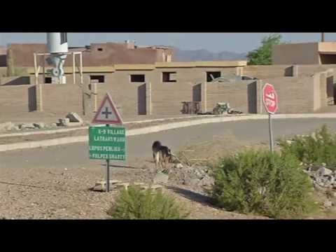 Military Working Dogs train at Yuma Proving Ground (June 2013)